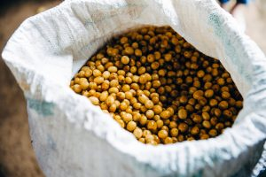 golden-coffee-beans-after-harvest